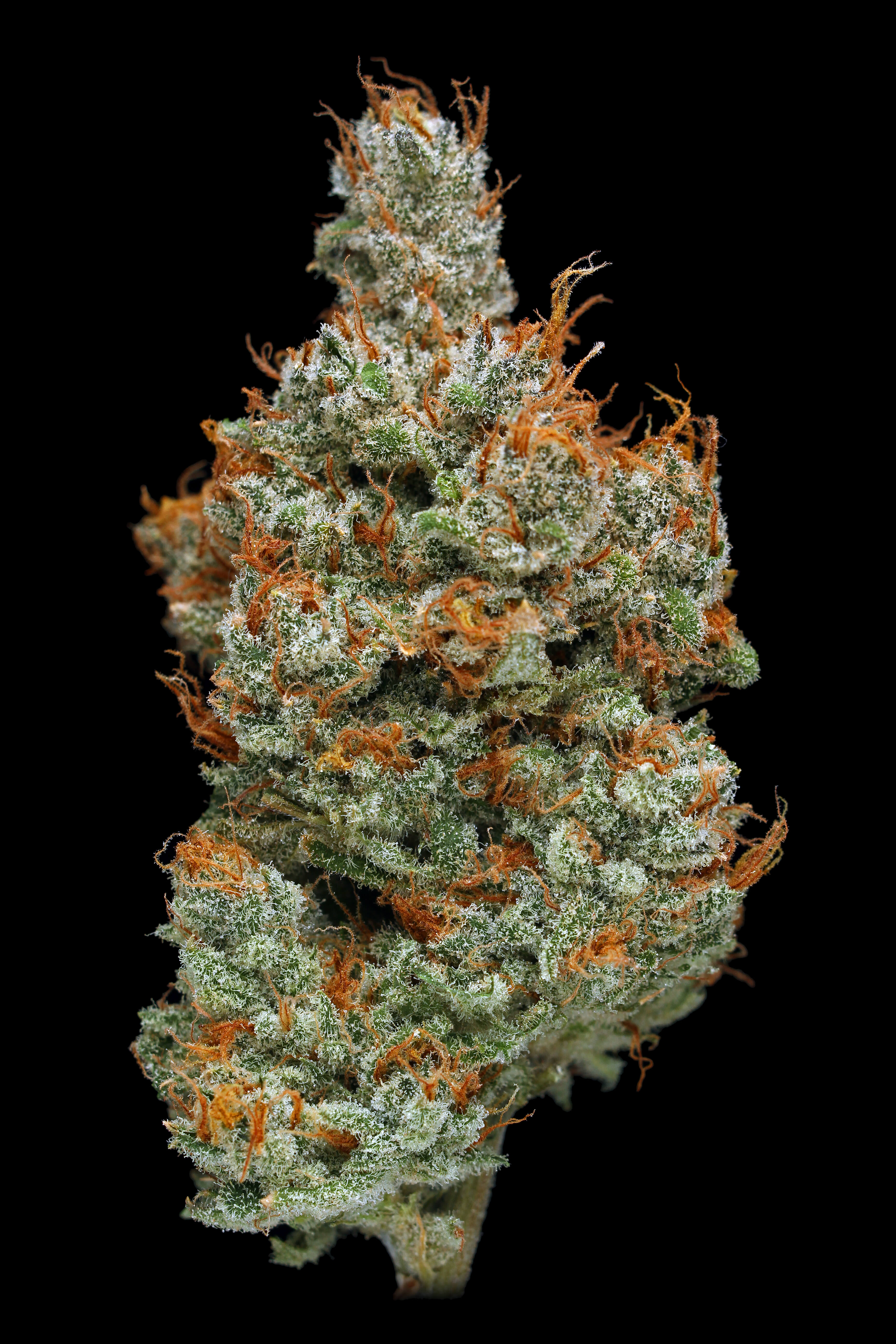 Phat Panda   Home - Premium cannabis grower